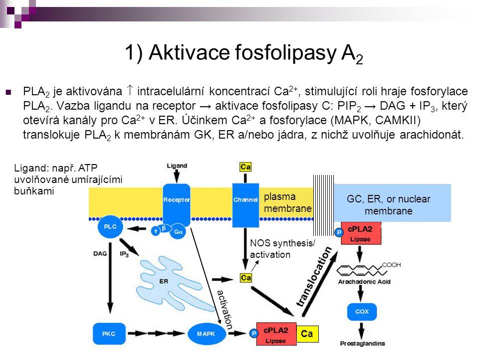 1) Aktivace fosfolipasy A2