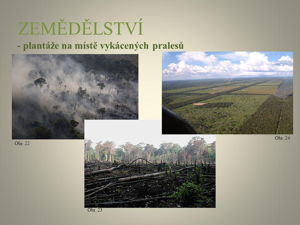 ZEMĚDĚLSTVÍ - plantáže na místě vykácených pralesů Obr. 24 Obr. 22