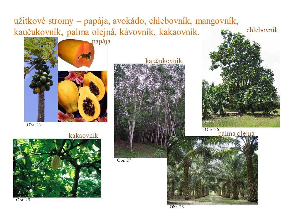 užitkové stromy – papája, avokádo, chlebovník, mangovník, kaučukovník, palma olejná, kávovník, kakaovník.