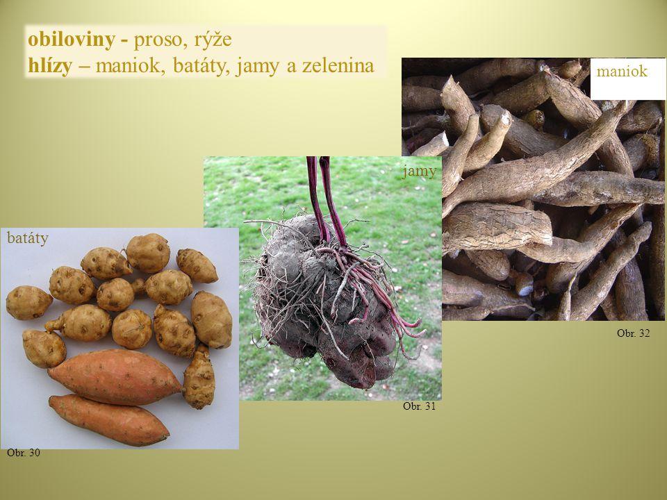 hlízy – maniok, batáty, jamy a zelenina