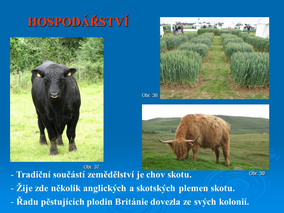 HOSPODÁŘSTVÍ Tradiční součástí zemědělství je chov skotu.