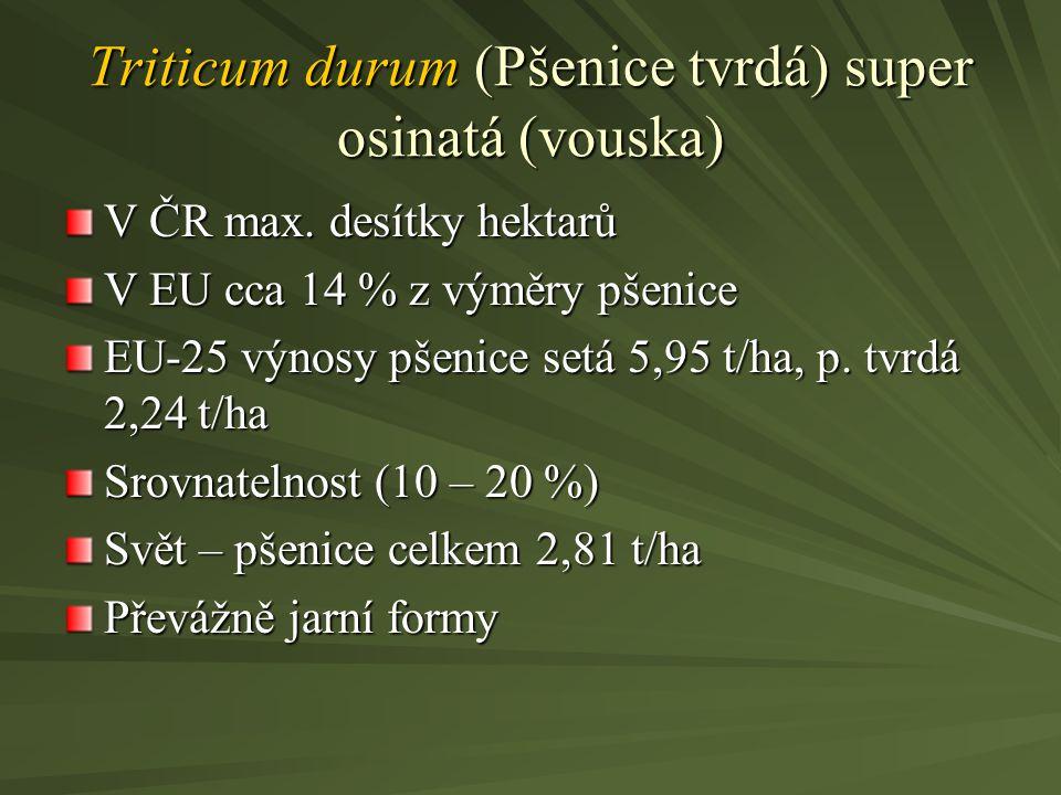 Triticum durum (Pšenice tvrdá) super osinatá (vouska)