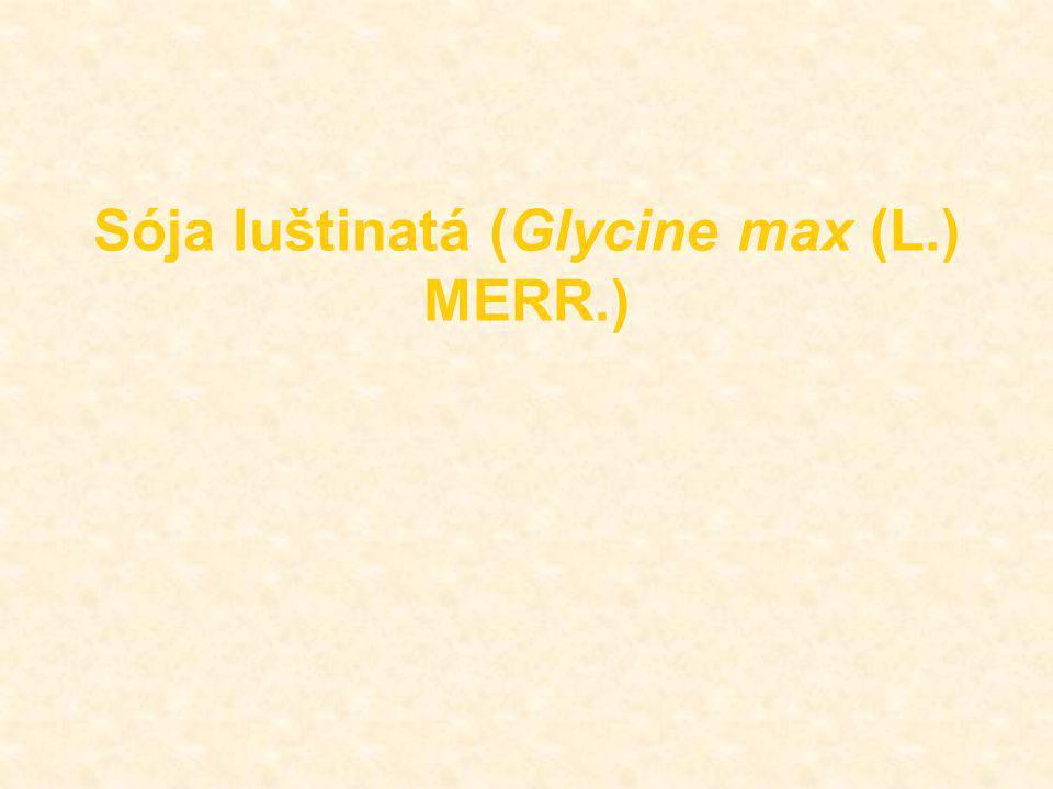 Sója luštinatá (Glycine max (L.) MERR.)