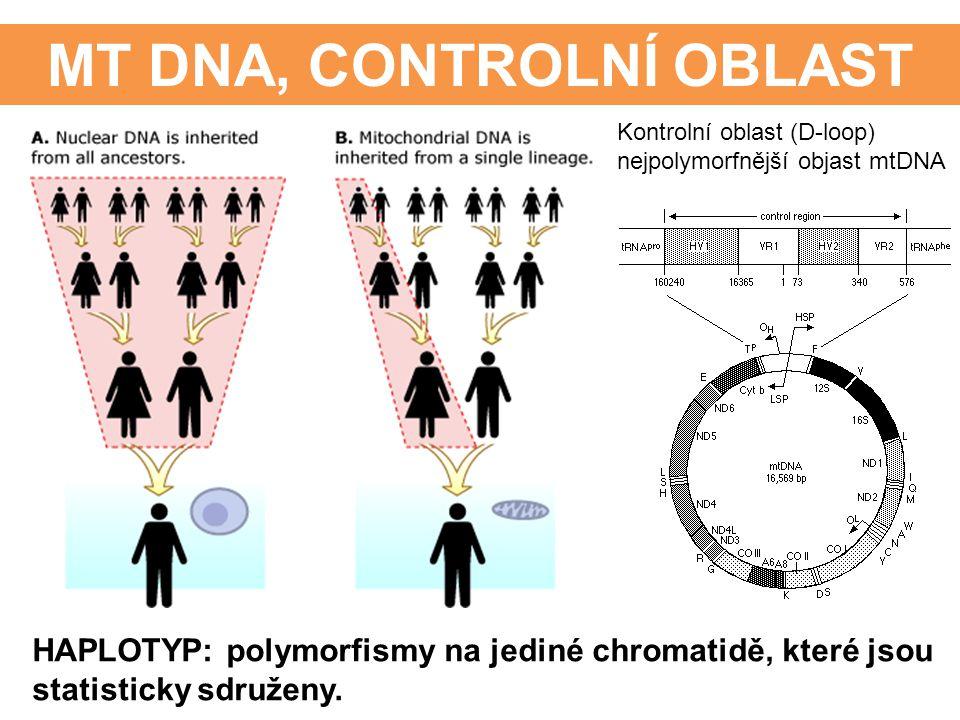 MT DNA, CONTROLNÍ OBLAST