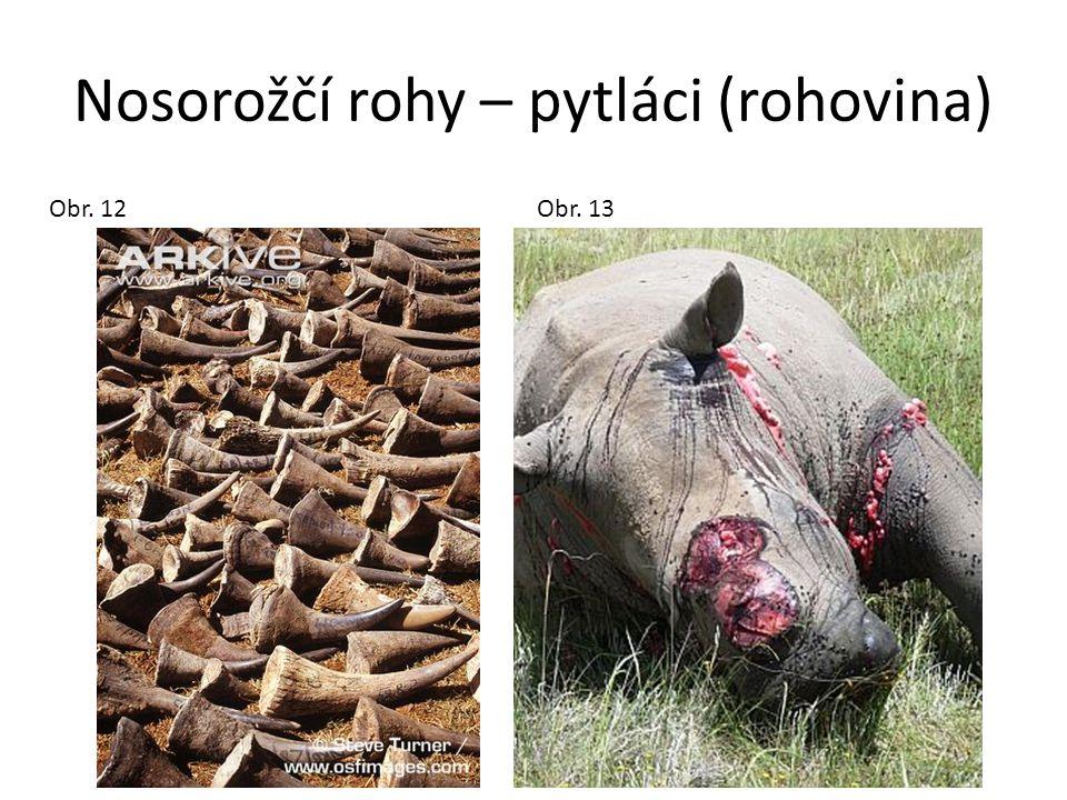 Nosorožčí rohy – pytláci (rohovina)