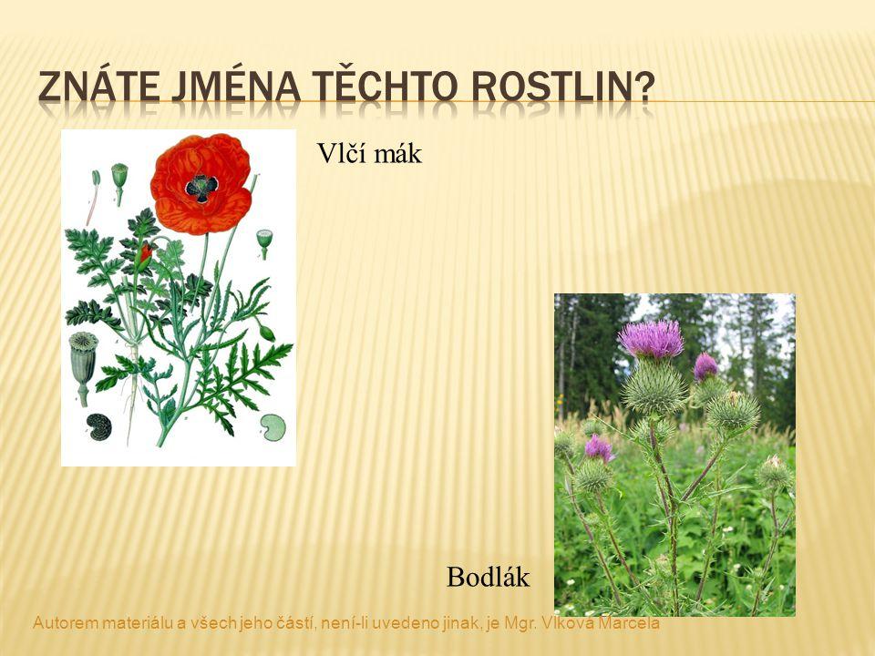 Znáte jména těchto rostlin