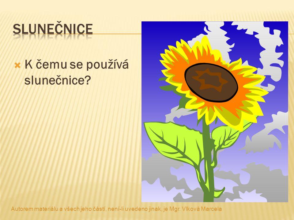 slunečnice K čemu se používá slunečnice