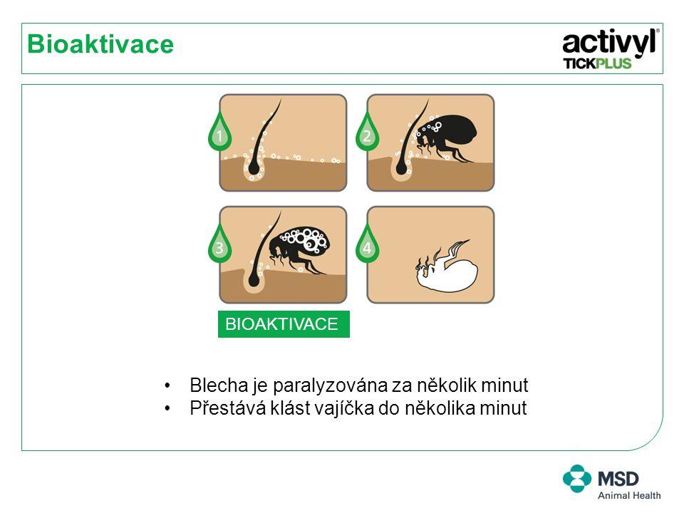 Bioaktivace Blecha je paralyzována za několik minut