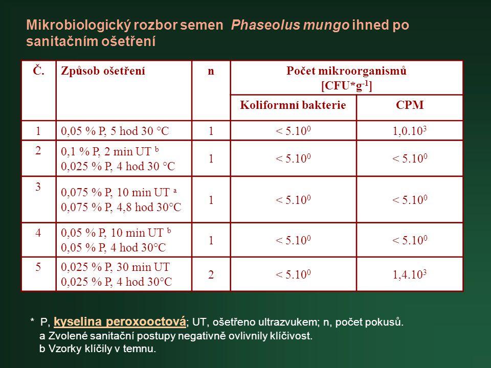 Mikrobiologický rozbor semen Phaseolus mungo ihned po sanitačním ošetření