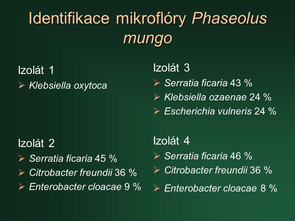 Identifikace mikroflóry Phaseolus mungo