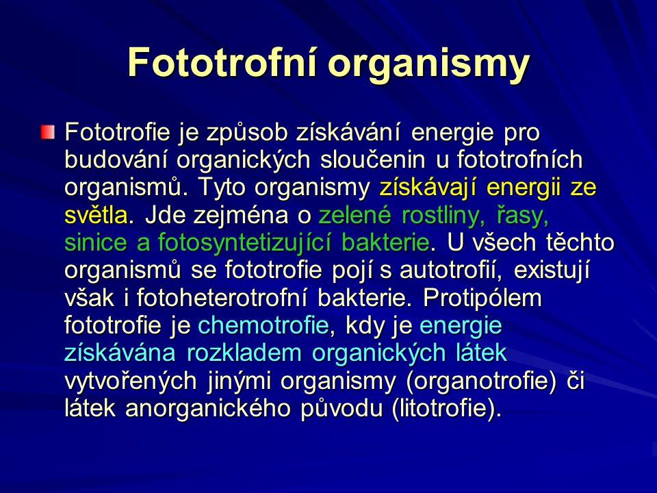 Fototrofní organismy