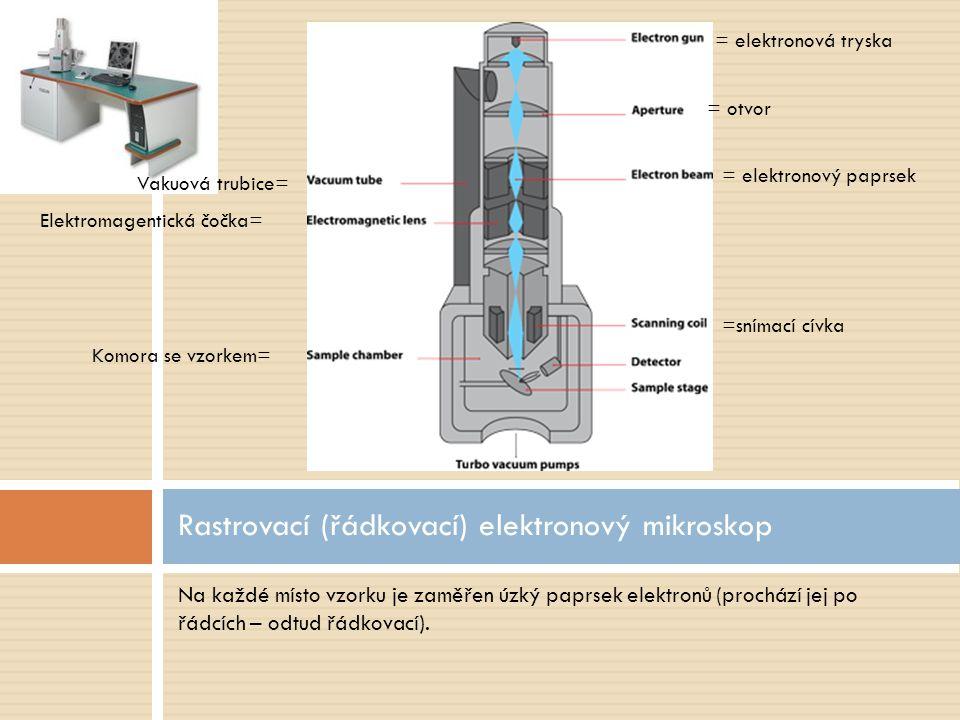 Rastrovací (řádkovací) elektronový mikroskop