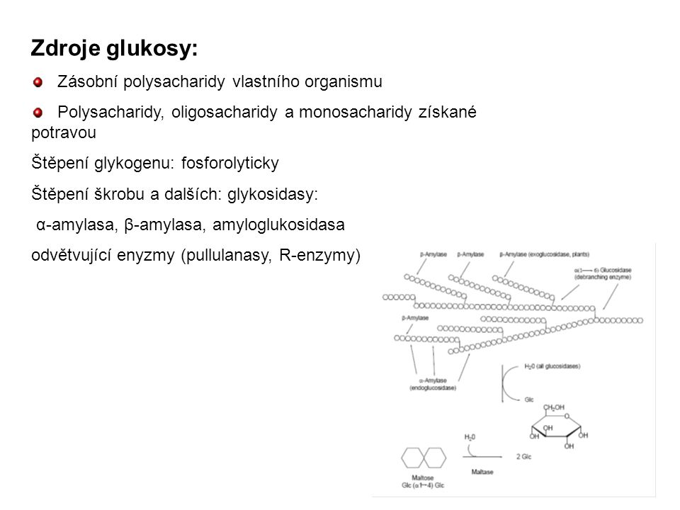 Zdroje glukosy: Zásobní polysacharidy vlastního organismu