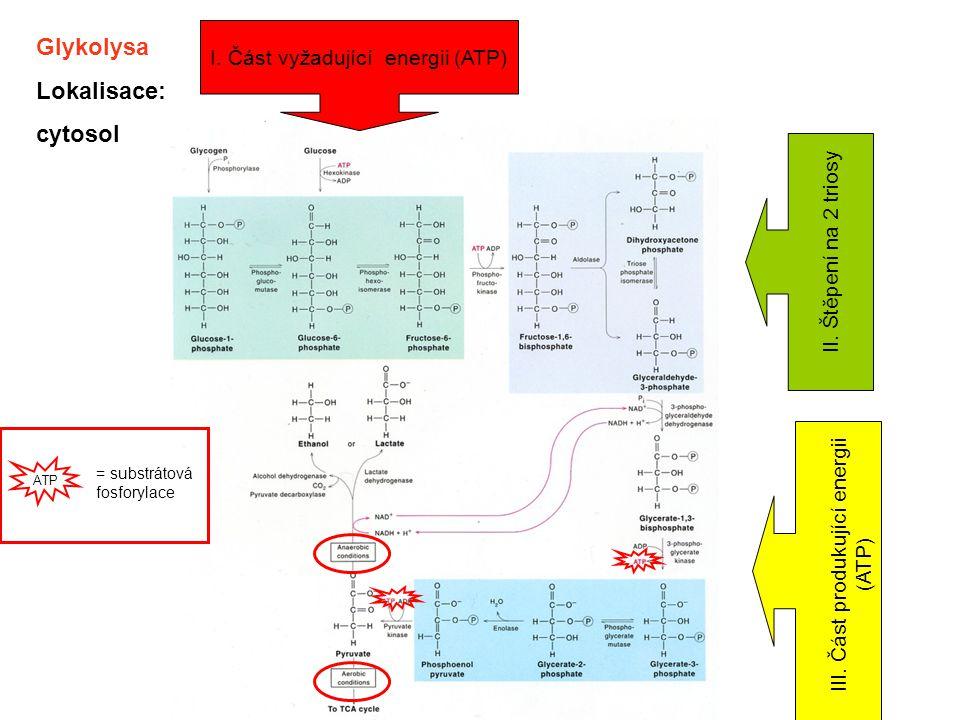 Glykolysa Lokalisace: cytosol I. Část vyžadující energii (ATP)