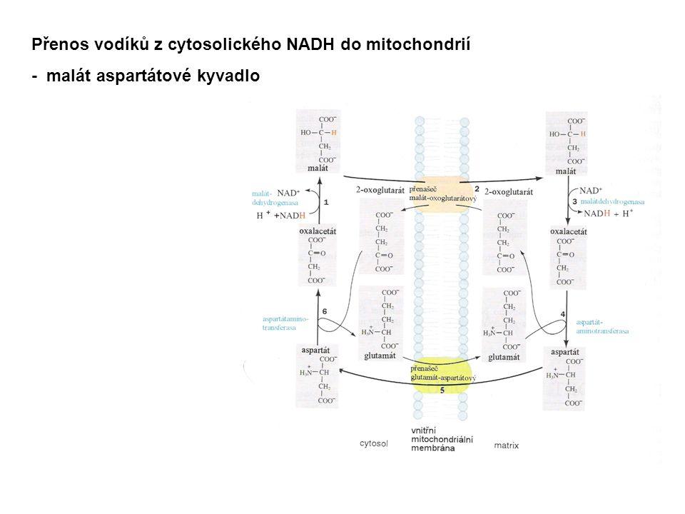 Přenos vodíků z cytosolického NADH do mitochondrií