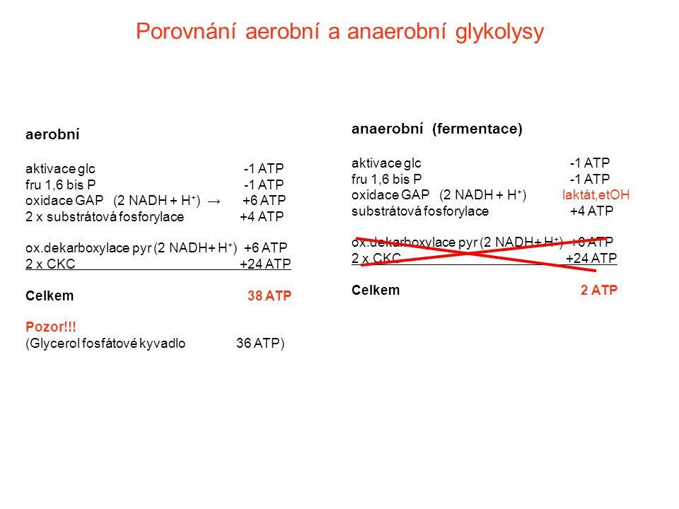 Porovnání aerobní a anaerobní glykolysy