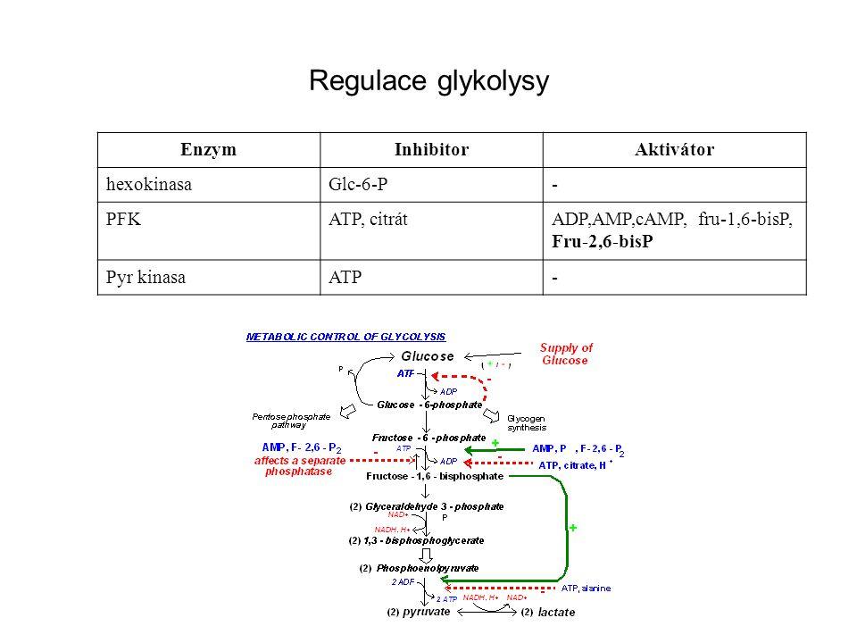 Regulace glykolysy Enzym Inhibitor Aktivátor hexokinasa Glc-6-P - PFK