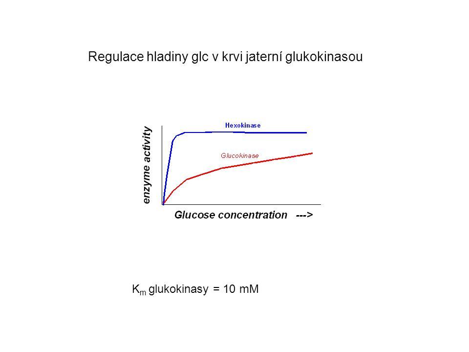 Regulace hladiny glc v krvi jaterní glukokinasou