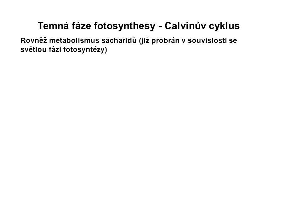 Temná fáze fotosynthesy - Calvinův cyklus