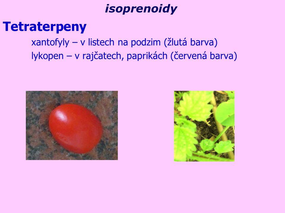 Tetraterpeny isoprenoidy xantofyly – v listech na podzim (žlutá barva)