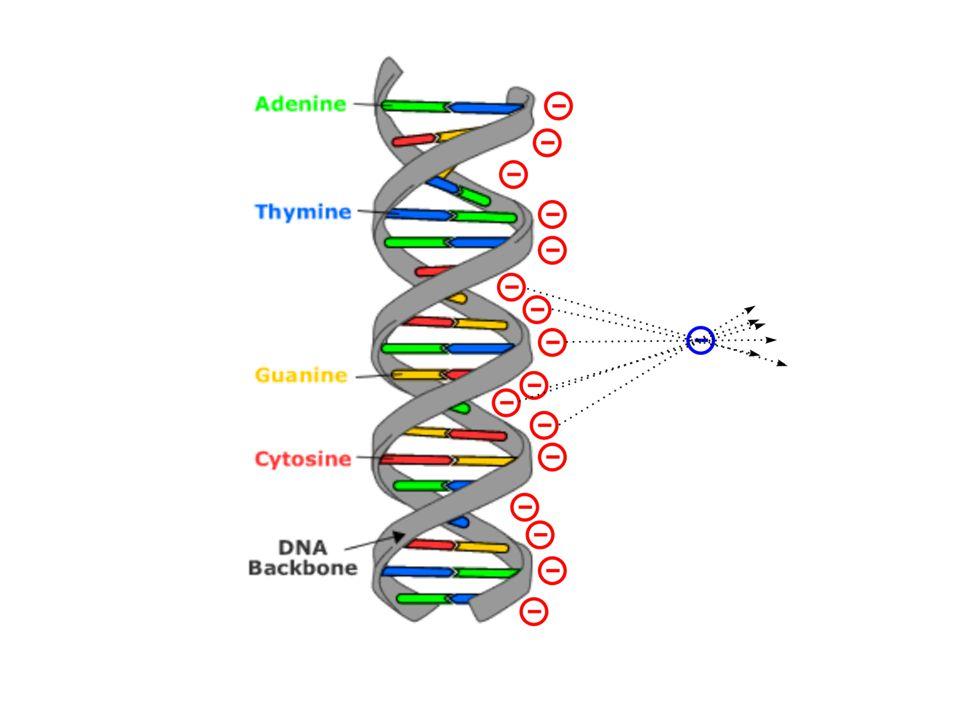 jaké je elektrické pole působící na nabitou částici od řady nábojů (DNA fosfáty působící na záporně nabitý ion)