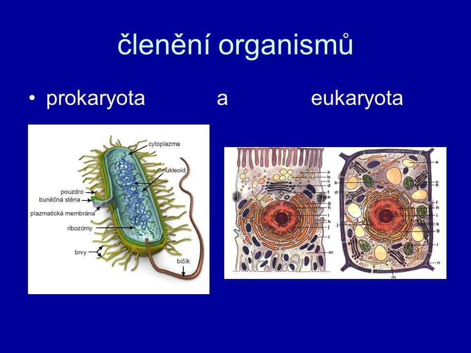 členění organismů prokaryota a eukaryota
