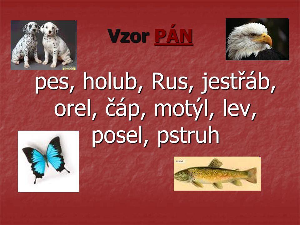 pes, holub, Rus, jestřáb, orel, čáp, motýl, lev, posel, pstruh