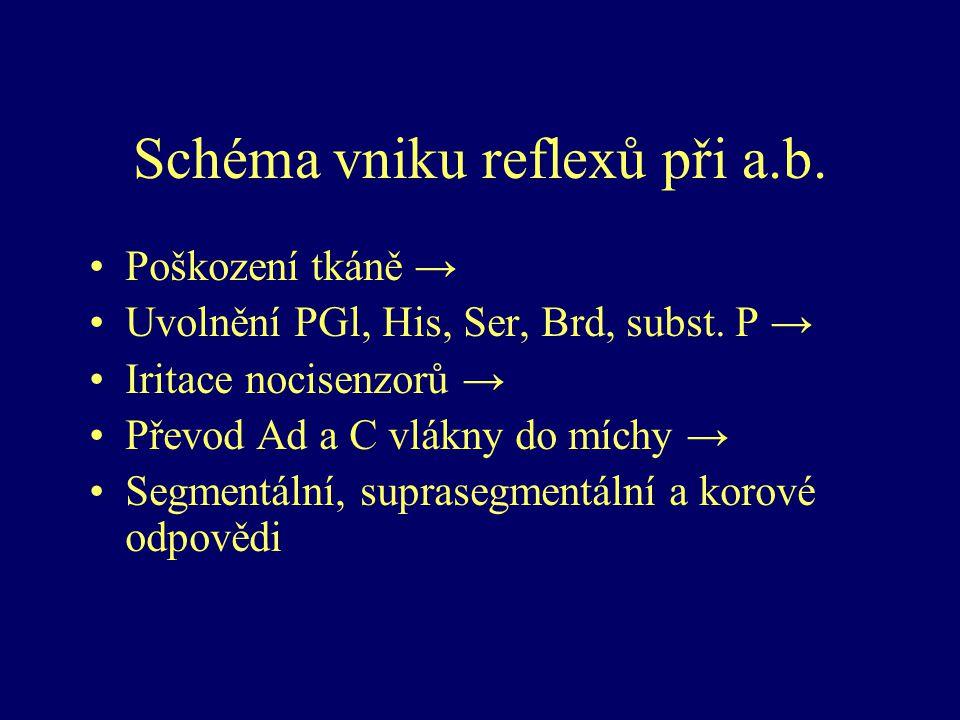 Schéma vniku reflexů při a.b.