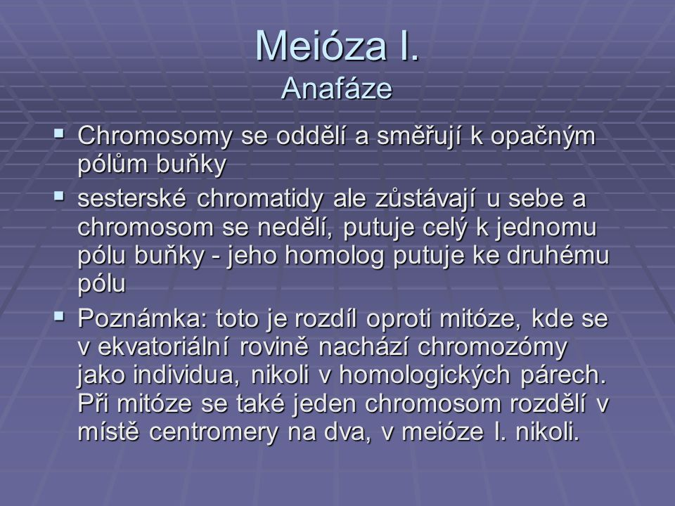 Meióza I. Anafáze Chromosomy se oddělí a směřují k opačným pólům buňky