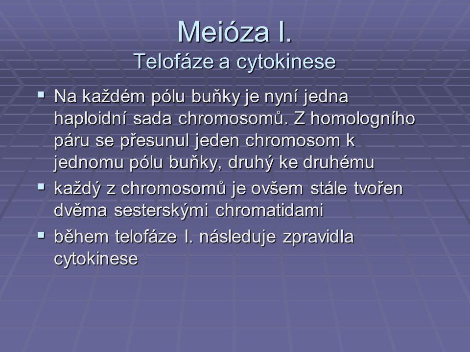 Meióza I. Telofáze a cytokinese