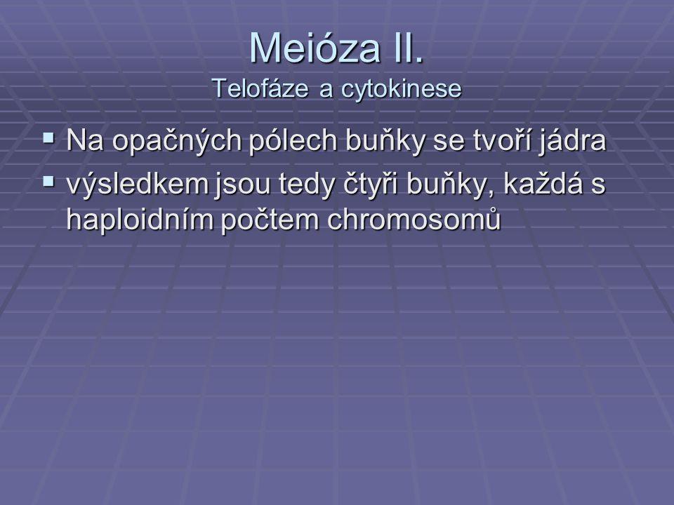 Meióza II. Telofáze a cytokinese
