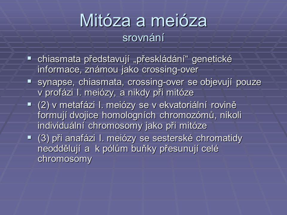 Mitóza a meióza srovnání