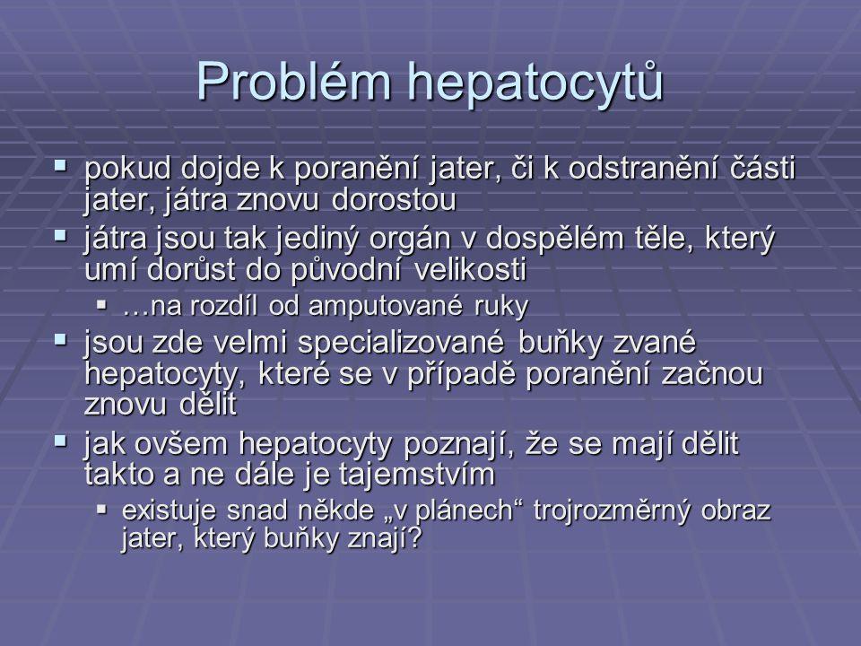 Problém hepatocytů pokud dojde k poranění jater, či k odstranění části jater, játra znovu dorostou.