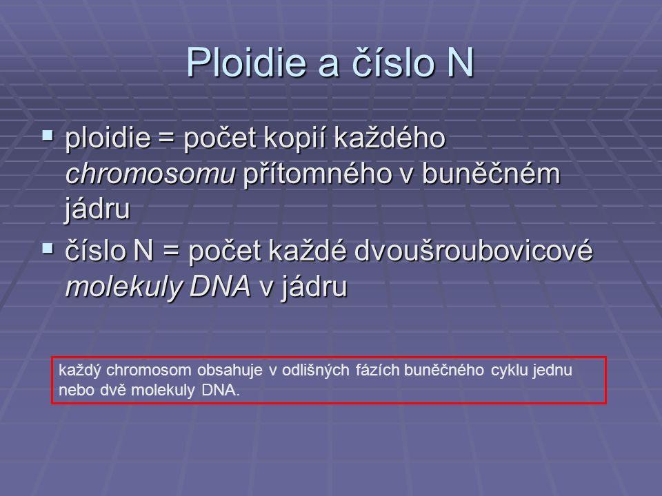 Ploidie a číslo N ploidie = počet kopií každého chromosomu přítomného v buněčném jádru. číslo N = počet každé dvoušroubovicové molekuly DNA v jádru.