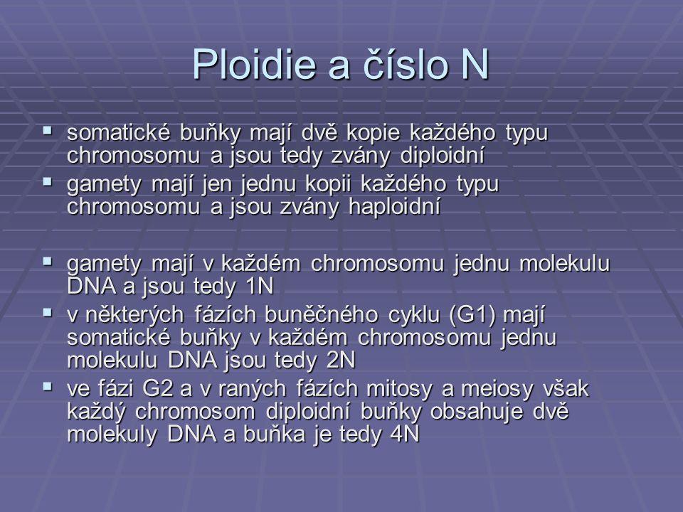 Ploidie a číslo N somatické buňky mají dvě kopie každého typu chromosomu a jsou tedy zvány diploidní.
