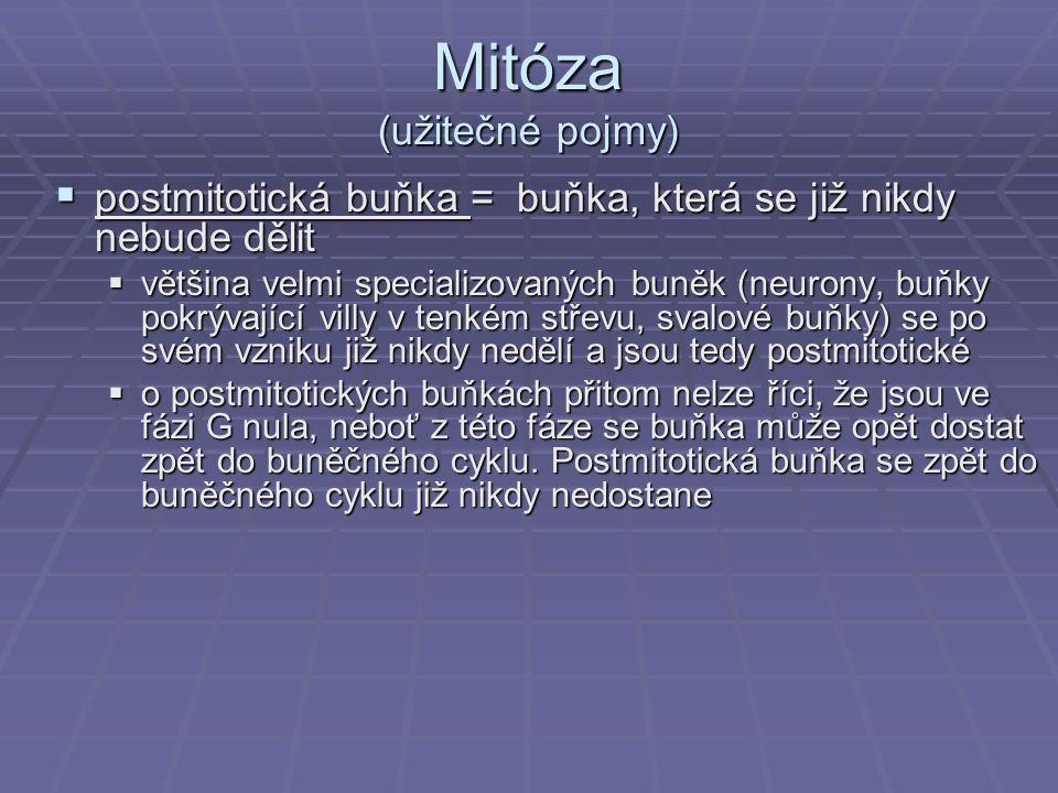 Mitóza (užitečné pojmy)