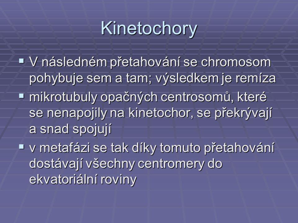 Kinetochory V následném přetahování se chromosom pohybuje sem a tam; výsledkem je remíza.