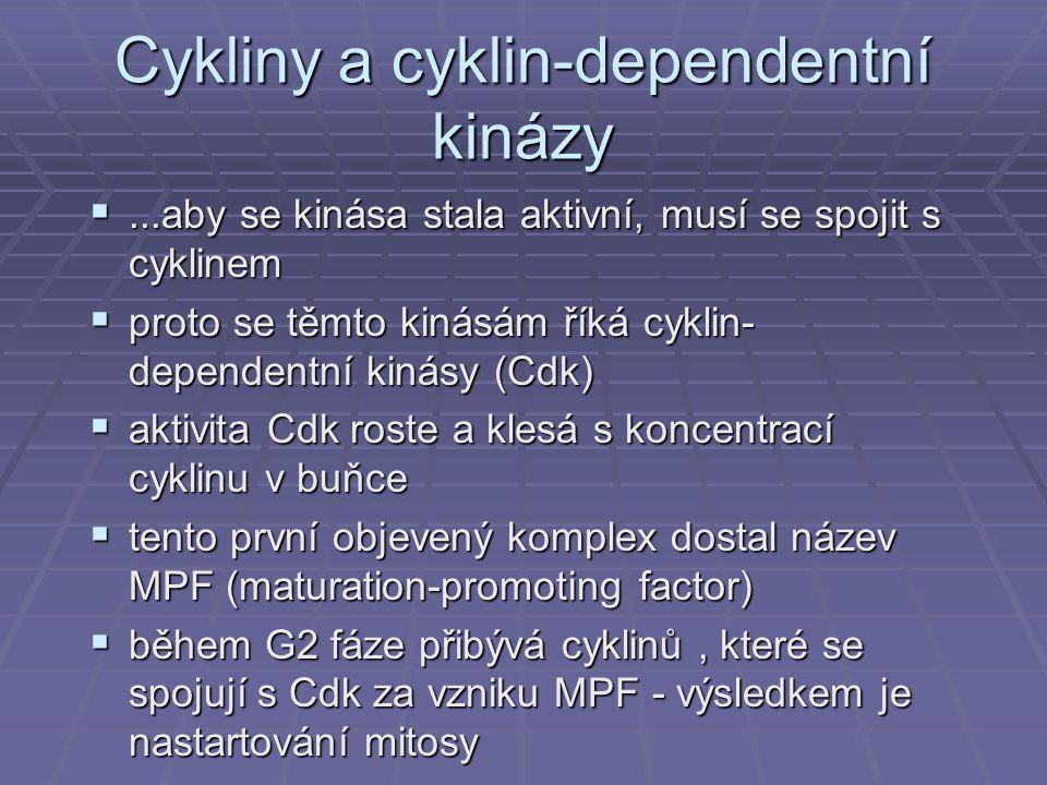 Cykliny a cyklin-dependentní kinázy