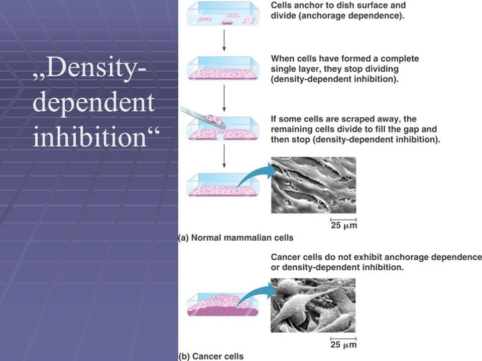 """""""Density-dependent inhibition"""