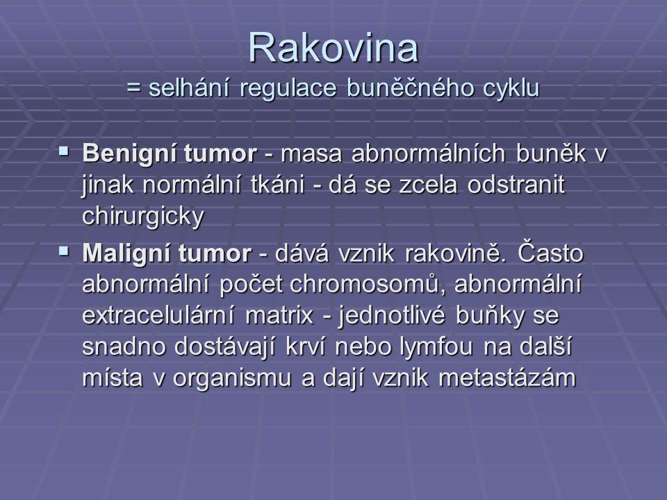 Rakovina = selhání regulace buněčného cyklu