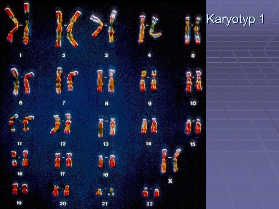Karyotyp 1