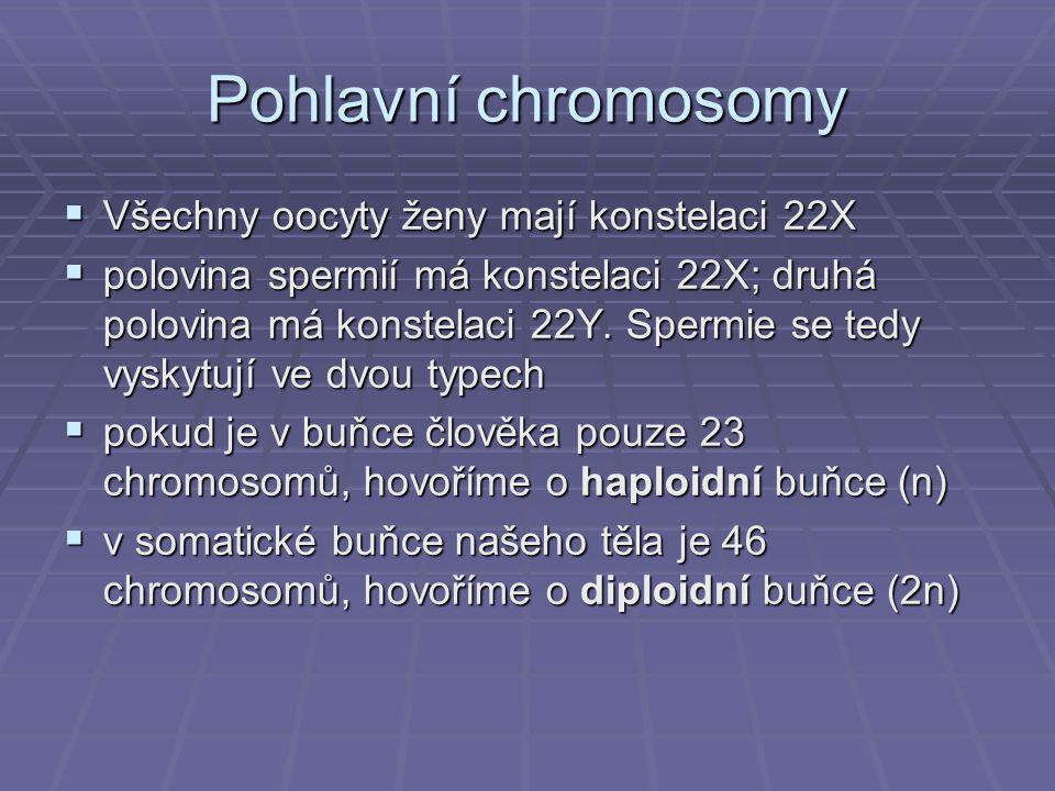 Pohlavní chromosomy Všechny oocyty ženy mají konstelaci 22X