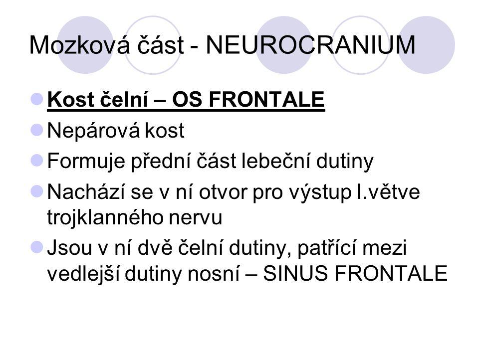 Mozková část - NEUROCRANIUM