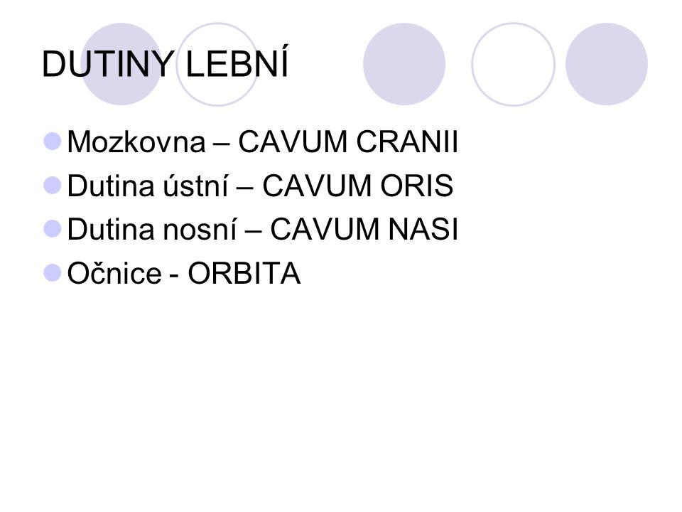DUTINY LEBNÍ Mozkovna – CAVUM CRANII Dutina ústní – CAVUM ORIS