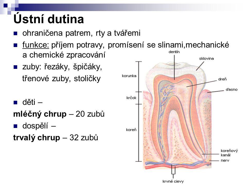 Ústní dutina ohraničena patrem, rty a tvářemi