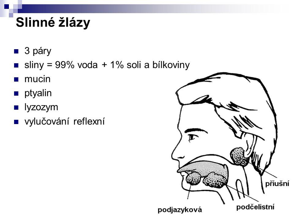 Slinné žlázy 3 páry sliny = 99% voda + 1% soli a bílkoviny mucin