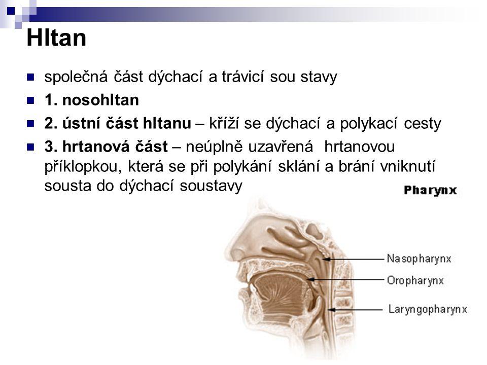 Hltan společná část dýchací a trávicí sou stavy 1. nosohltan