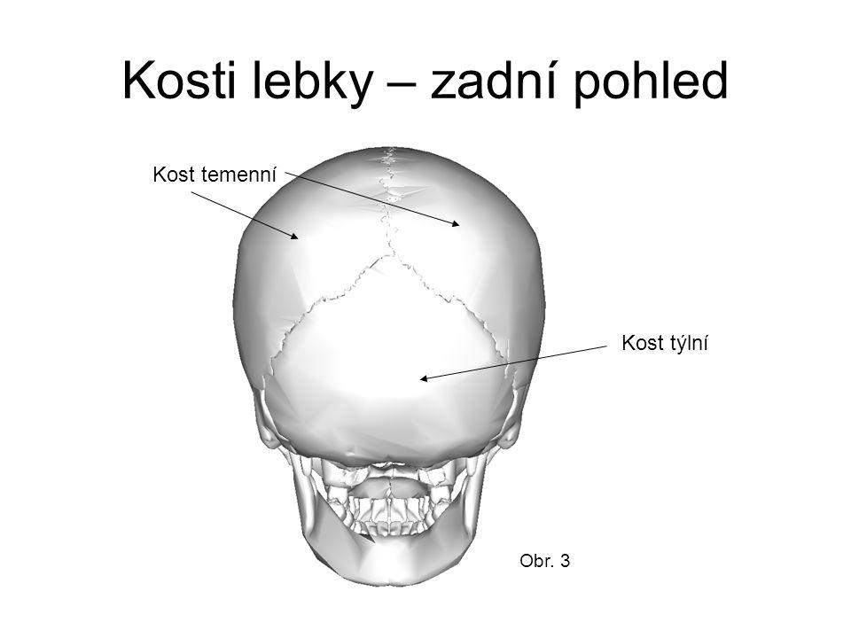 Kosti lebky – zadní pohled