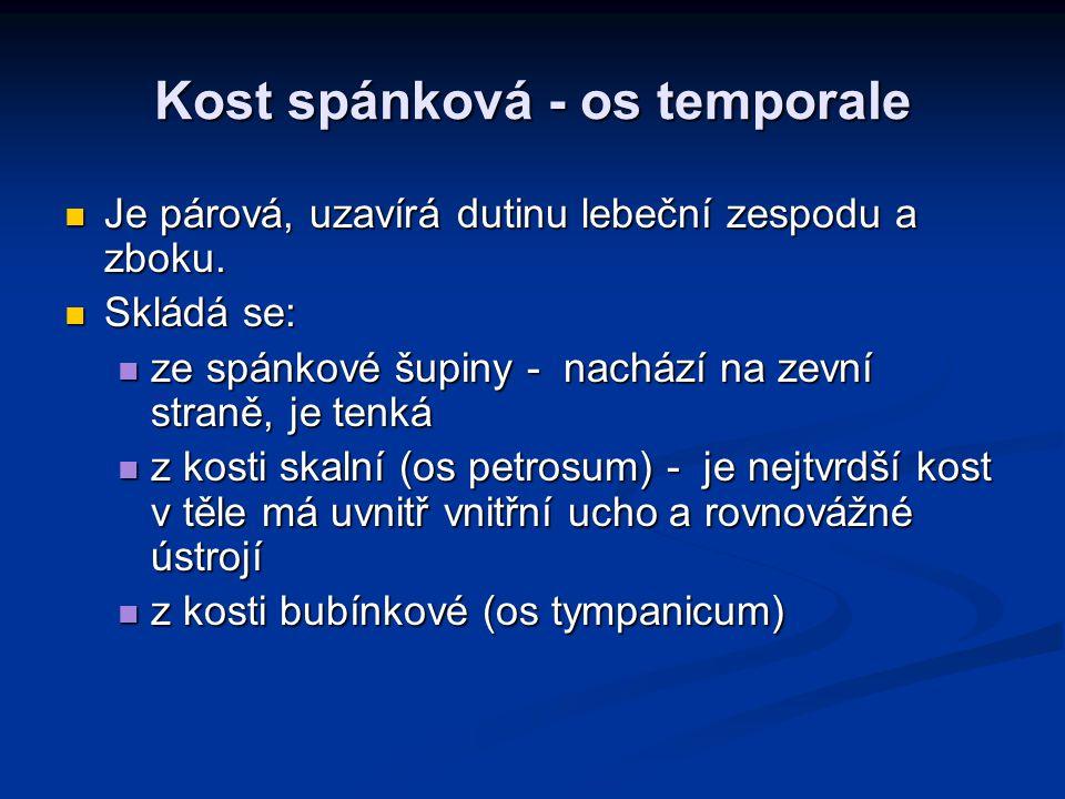 Kost spánková - os temporale