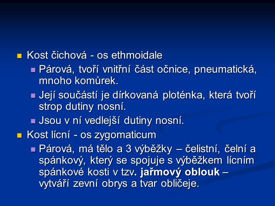 Kost čichová - os ethmoidale